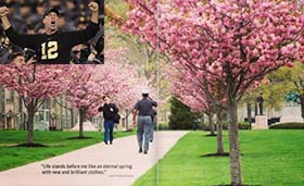 Cherry Trees and Dan Ragsdale '81